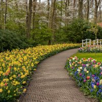 Tulips in Holland 04-2015 (7) :: Arturs Ancans