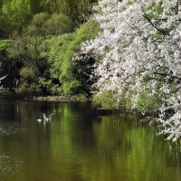Весна в парке :: Денис Масленников