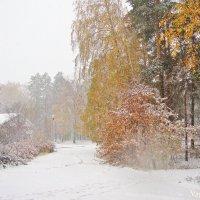 Встреча осени с зимой :: Лидия (naum.lidiya)