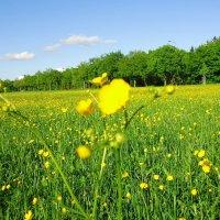 Я подарю Вам поле цветов! :: Galina Dzubina