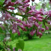 Весна! :: Galina Dzubina