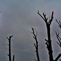 голые деревья.под пасмурное настроение :: АННЕТТА ФОТОМОДЕЛЕЛЮБИТЕЛЬ