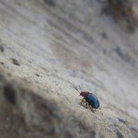 Живёшь , пока карабкаешься в гору ! :: Мила Бовкун