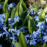 Весенние цветы :: Наталия Короткова
