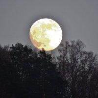 при луне :: Константин Трапезников