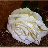Нежная роза от любимого :: Лидия (naum.lidiya)