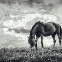 лошадка :: Vladimir Zhavoronkov