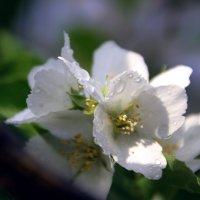Опять Весна на  белом свете....!!! :: Валерия  Полещикова