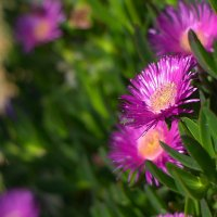 цветы заморские... :: Александр Александр