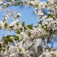 Весна на фоне мирного неба :: Длинный Кот