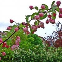 Весна в расцвете! Всё цветёт! Дарует нам великолепье. И красок ярких разноцветье! :: Galina Dzubina