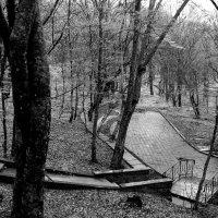 В парке туманном... :: Валерия  Полещикова