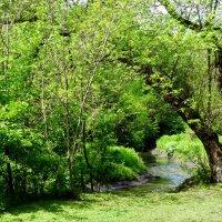 Май в лесопарке... :: Тамара (st.tamara)