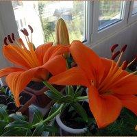 Лилия Гавриш Orange Breeze :: Вера