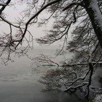 Туманное зимнее утро :: Anna L