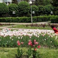 Вдыхая аромат тюльпанов.... :: LORRA ***