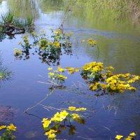 Весна на воде... :: BoxerMak Mak