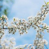 майский цвет :: Сергей M