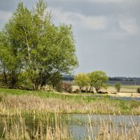 У озера :: Marina Timoveewa