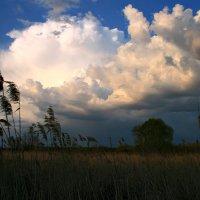 В синем небе плывут облака... :: Евгений Юрков