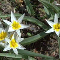 Цветы мая :: Александр Грищенко