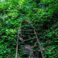 Лестница в никуда, Абхазия :: Андрей Володин