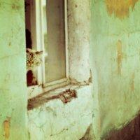 все тот же кот)) :: Varvara Aravrav
