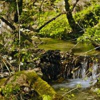 Вешние воды :: Константин Николаенко
