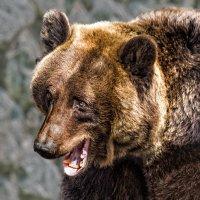 Медведица :: Nn semonov_nn
