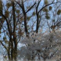 Весна :: Валентина Данилова