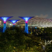 Supertree Grove. Singapore. :: Евгений Банных