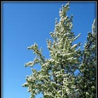 Буйное майское цветение. :: Fededuard Винтанюк