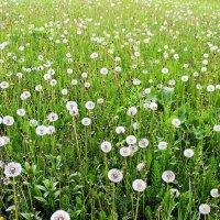 Есть под майским солнцем вот такая доля - поиграть на воле в перелети-поле... :: Валентина ツ ღ✿ღ