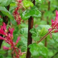 свежесть майского дождя :: Galina Dzubina