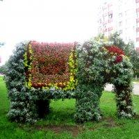Удивительный слоник. :: Елена Семигина