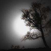 Лунное дерево :: Алексей Шехин