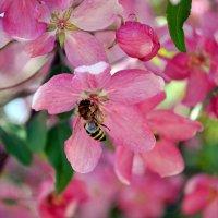 Завтрак у пчёлки :: Олеся Стоцкая