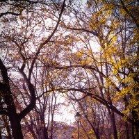 Осень в Праге :: Anna Kononets