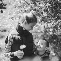 Братья :: Кристина Короткова