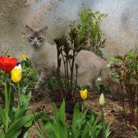 Зацвели цветочки у кота в  садочке ... :: Ната Волга
