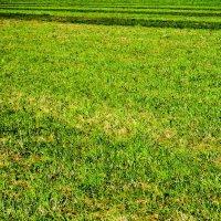Ломография на траве :: Евгений Михайлов