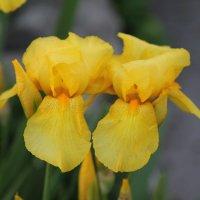 Цветочный хоровод-1. :: Руслан Грицунь