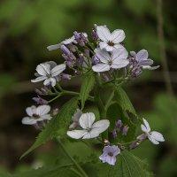 Лесной цветок. :: Яков Реймер