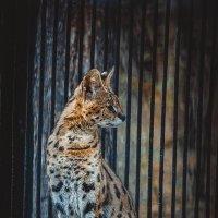Зоопарк Новосибирск :: Анна Лазаренко