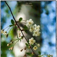 Весна :: Леонид