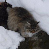 The cat. :: Олег Дейнега