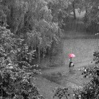 Красный зонт :: shvlad