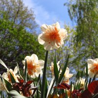 ...весна!.. :: Ирина Тазеева