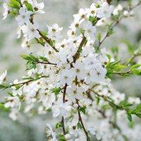 Весна в Ботаническом саду. :: Ирина Нафаня
