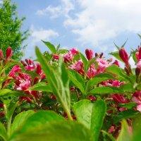 Весна, весна! Как воздух чист! Как ясен небосклон! :: Galina Dzubina